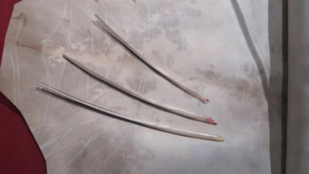New, unused parchment and three feather pens (without feathers).