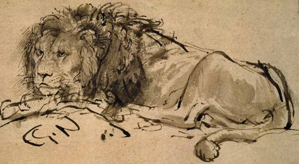 Sketch of a grown male lion lying down, by Rembrandt.